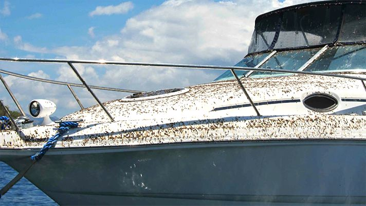 Boats left in the water will get covered in bird droppings